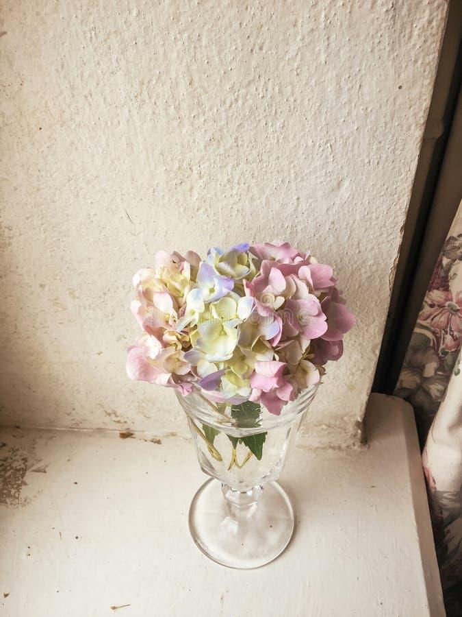 美丽的在酒杯的八仙花属五颜六色的花束用水,r 库存图片