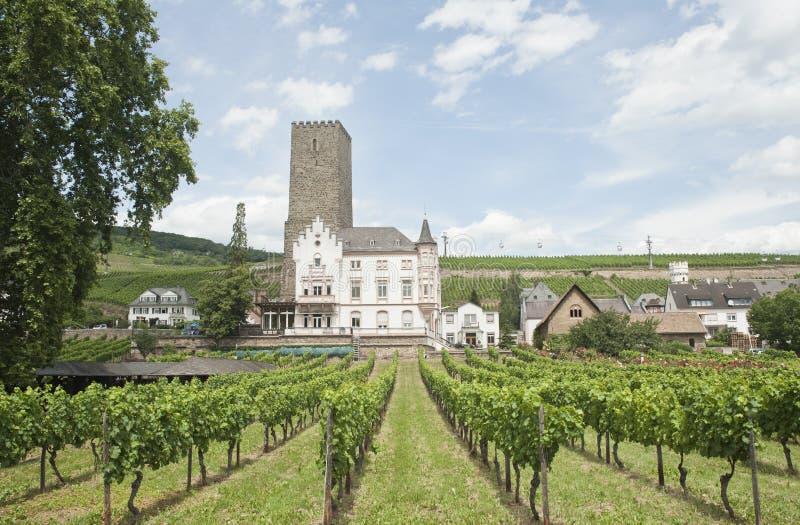 美丽的城堡rudesheim风景葡萄园 免版税库存照片