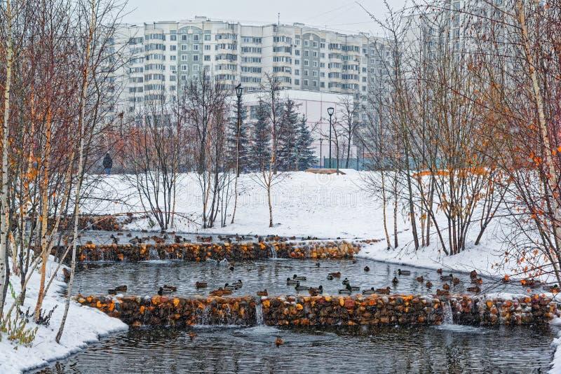 美丽的城市公园在城市的郊区 冬天、阴沉的天空和暴雪 鸭子在一条未冻结的小河冬眠 库存图片