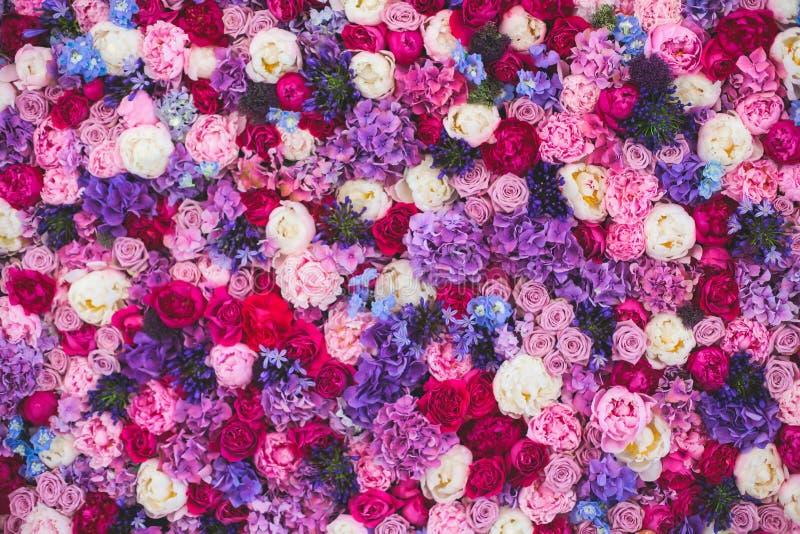 美丽的墙壁由红色紫罗兰色紫色花,玫瑰,郁金香,新闻墙壁,背景制成 免版税库存照片