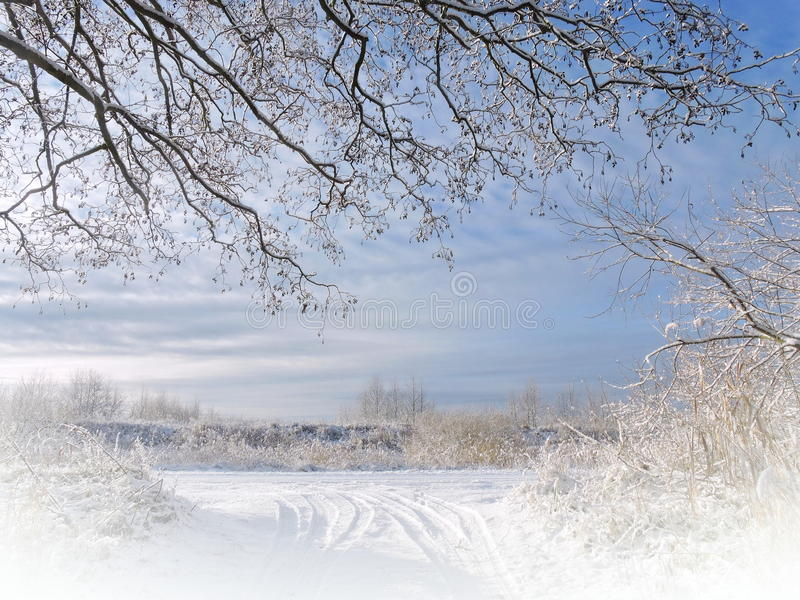 美丽的多雪的树 库存图片