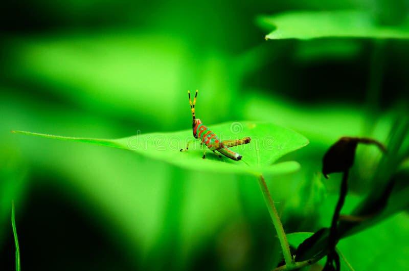 美丽的多颜色昆虫 免版税图库摄影