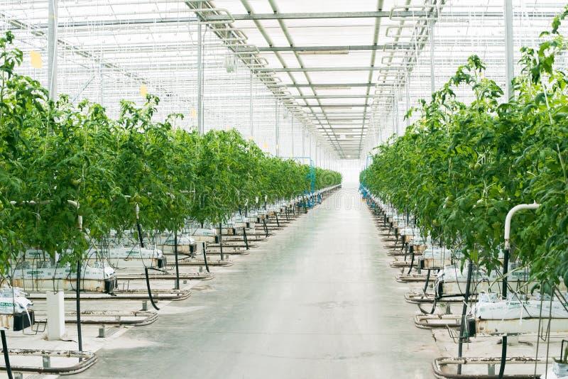 美丽的大明亮的温室 免版税库存照片