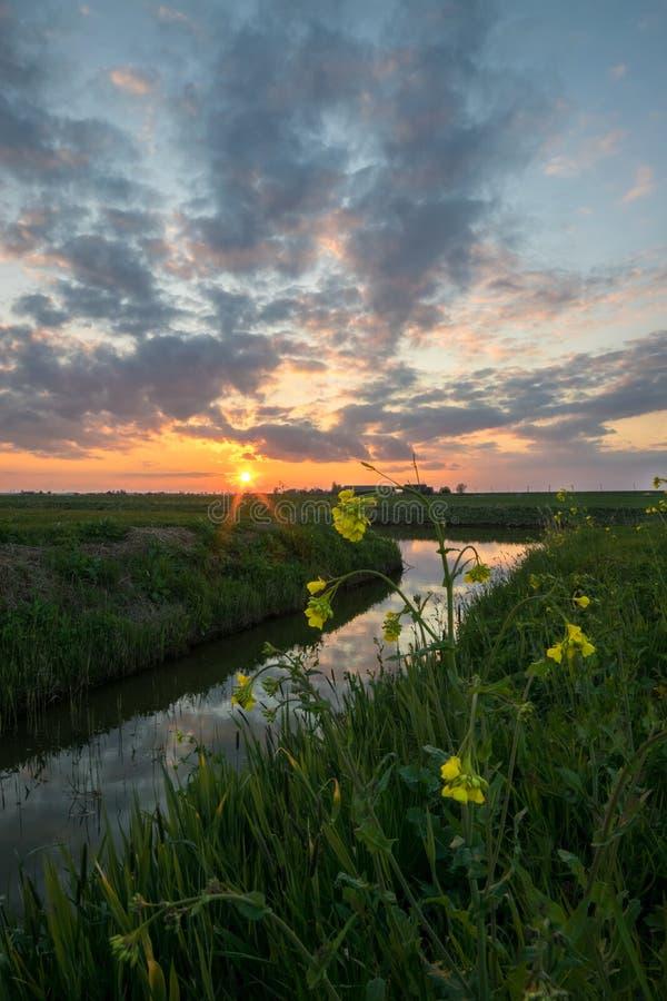 美丽的天空和云彩在日落沿一条小河在荷兰用油菜籽在前景 免版税库存照片