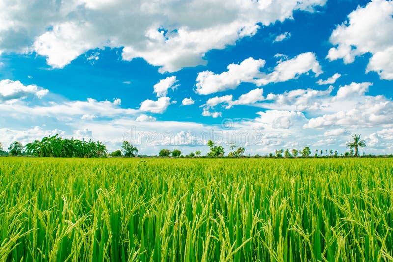 美丽的天空蔚蓝和白色多云背景在米领域在泰国的乡下风景,看起来新鲜和绿叶 库存照片