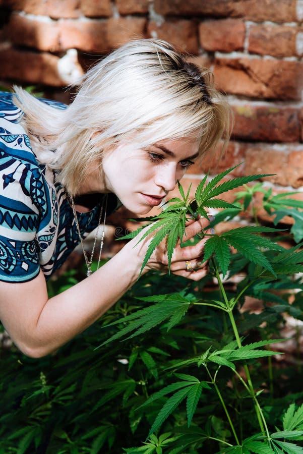 美丽的女孩嗅到的大麻下午 免版税库存图片