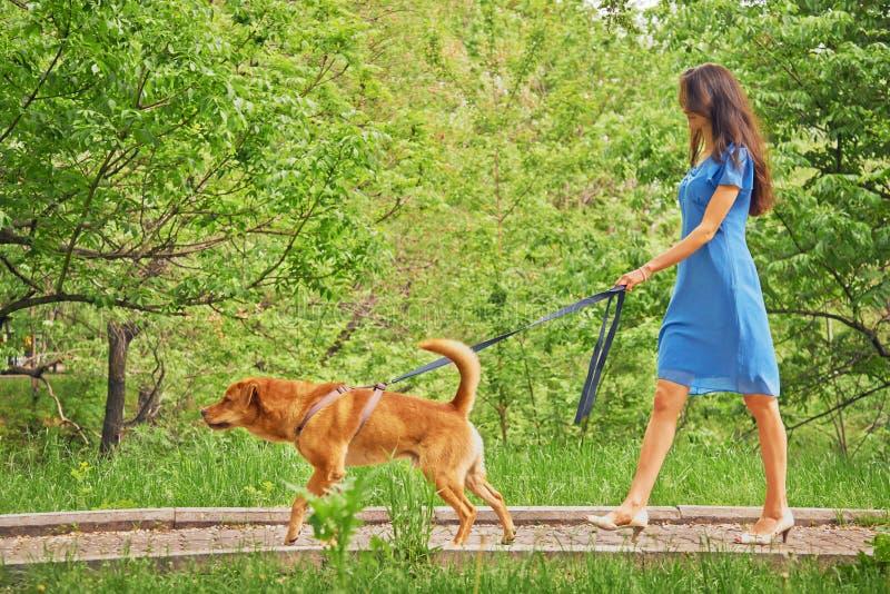 美丽的女孩走与狗 库存照片