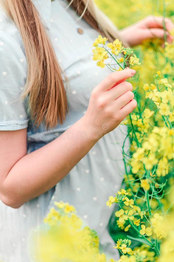 美丽的女性手接触油菜籽黄色花 库存图片
