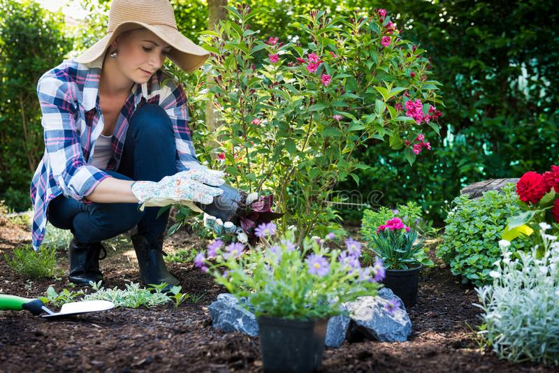 美丽的女性种植花的花匠佩带的草帽在她的庭院里 概念从事园艺 免版税库存图片