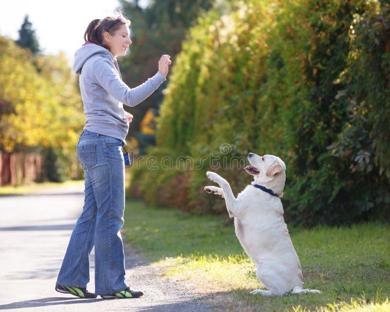 美丽的妇女训练狗 免版税库存图片