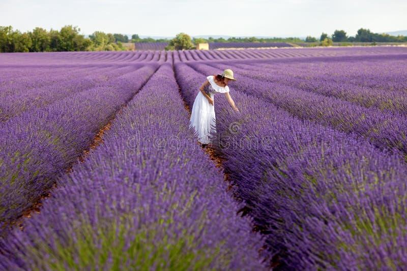 美丽的妇女采摘在紫罗兰色淡紫色, Prov的领域的淡紫色 免版税库存照片