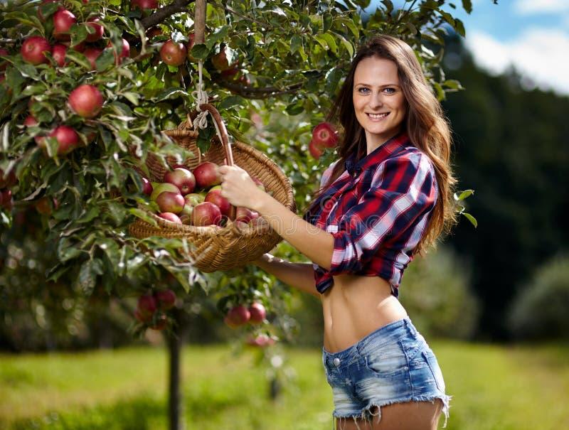 美丽的妇女采摘苹果 免版税库存照片