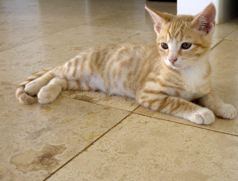 美丽的姜小猫,当闪耀的眼睛,延长和几乎混和入石灰华地板 库存图片