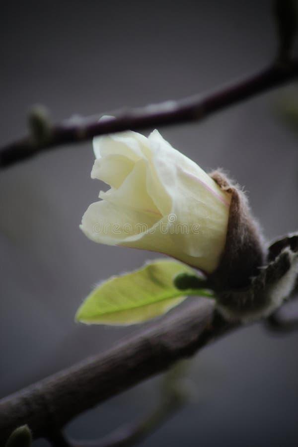美丽的宏白花照片 免版税库存图片