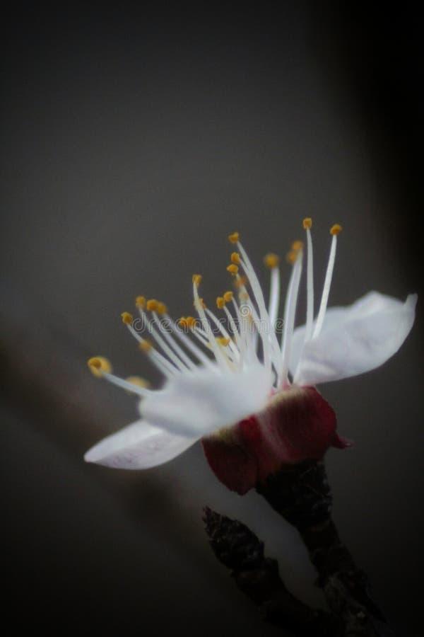 美丽的宏白花照片 免版税图库摄影