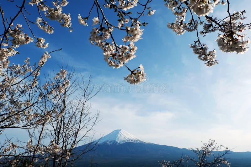 美丽的富士山接近的上面与雪盖的在上面与可能和在日本和松树的樱花 免版税库存图片