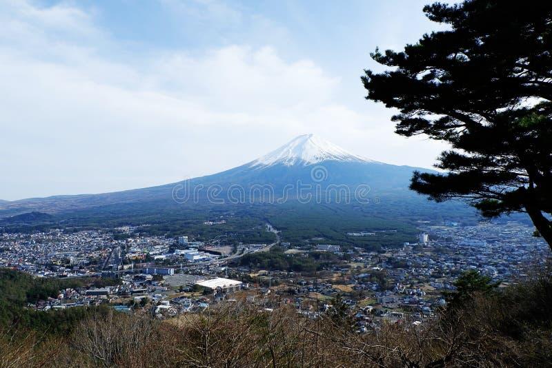 美丽的富士山接近的上面与雪盖的在上面与可能和在日本和松树的樱花 免版税图库摄影