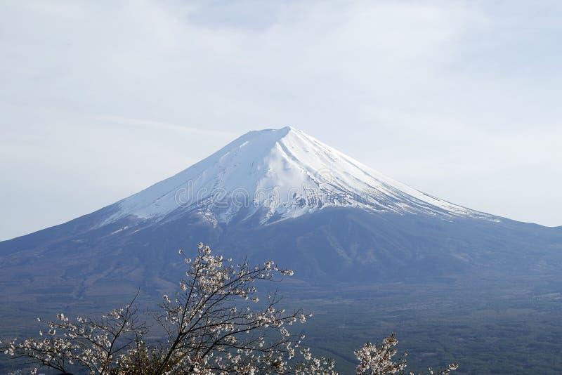 美丽的富士山接近的上面与雪盖的在上面与在日本可能和樱花 库存照片
