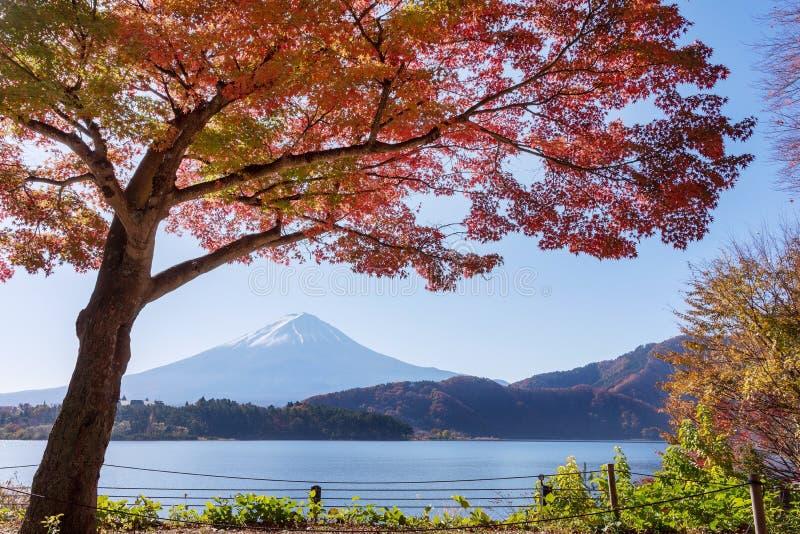 美丽的富士山景城在湖Kawaguchiko日本的秋天 免版税库存图片