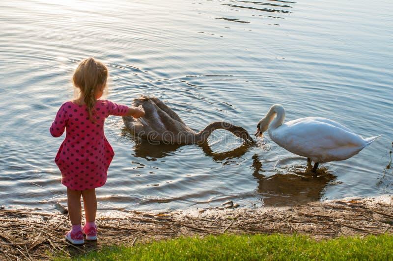 美丽的小女孩哺养的天鹅 免版税图库摄影