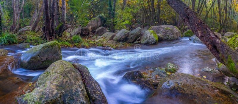 美丽的小河在森林里在西班牙,在村庄列斯Planes de Hostoles附近在加泰罗尼亚 库存照片