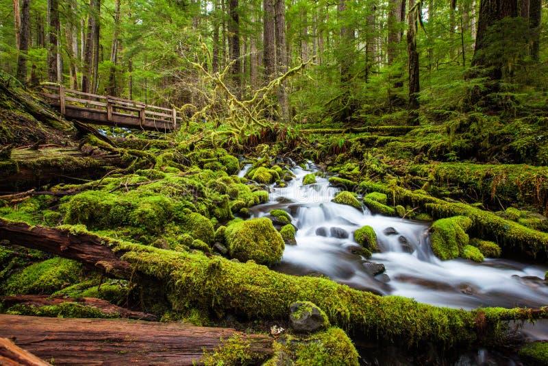 美丽的小瀑布瀑布在Sol Duc秋天内落后 免版税库存照片