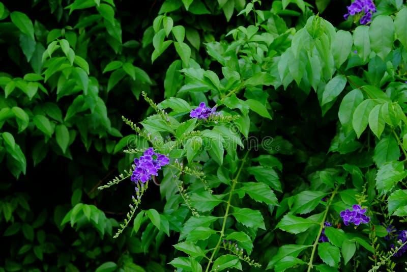 美丽的小紫色与绿色叶茂盛花束的花紫色花 免版税库存照片