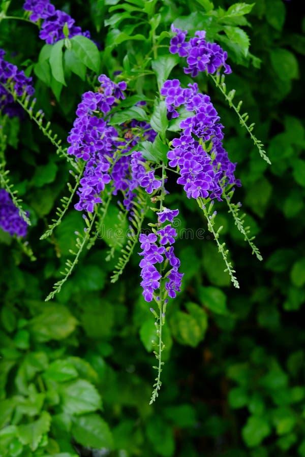 美丽的小紫色与绿色叶茂盛花束的花紫色花 库存图片