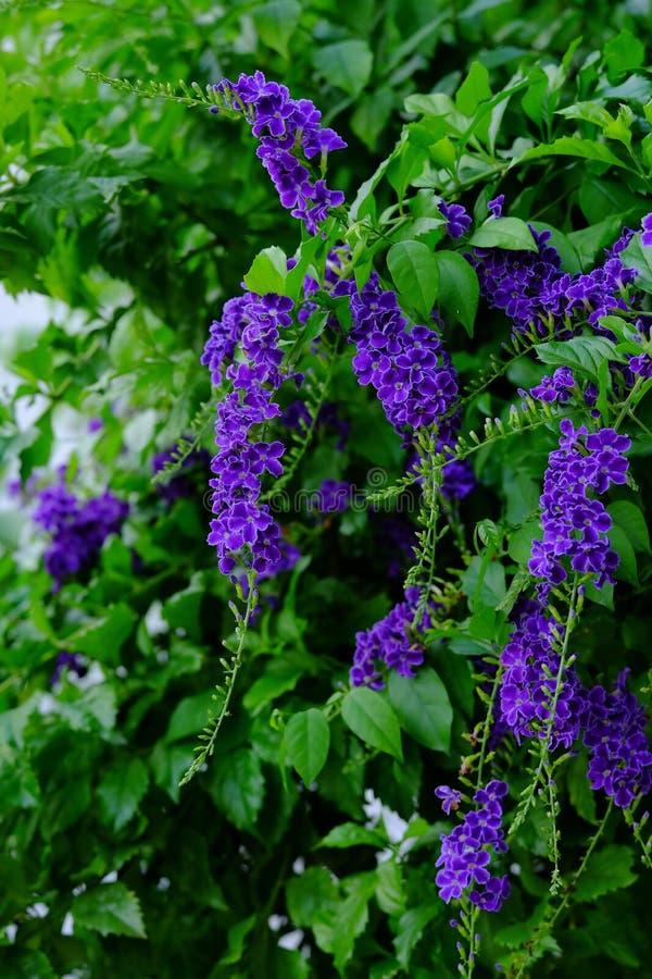 美丽的小紫色与绿色叶茂盛花束的花紫色花 库存照片