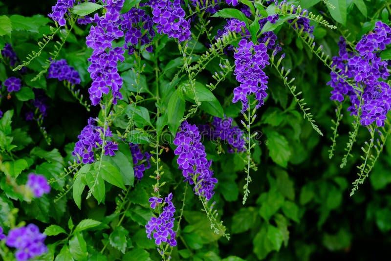 美丽的小紫色与绿色叶茂盛花束的花紫色花 图库摄影