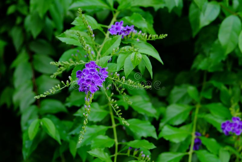 美丽的小紫色与绿色叶茂盛花束的花紫色花 免版税图库摄影