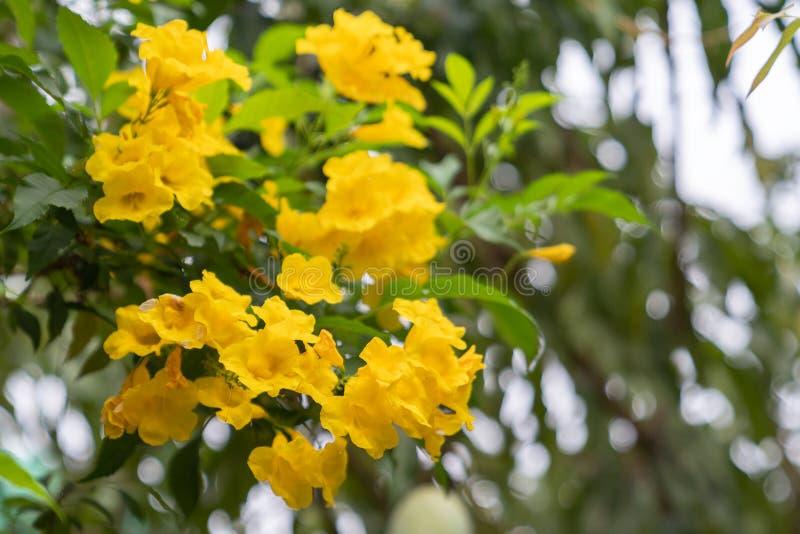 美丽的小黄色花 库存图片