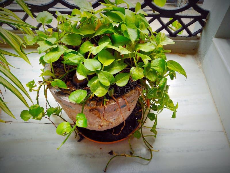 美丽的展示植物 免版税图库摄影