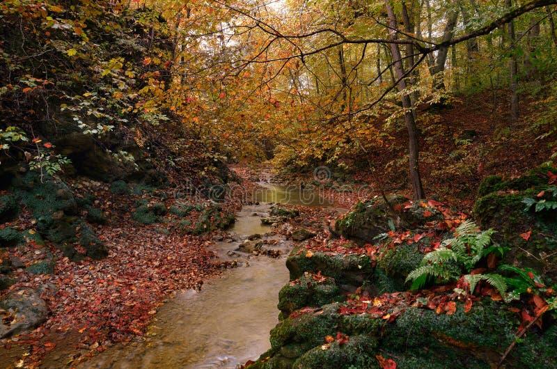 美丽的山小河在秋天 免版税图库摄影
