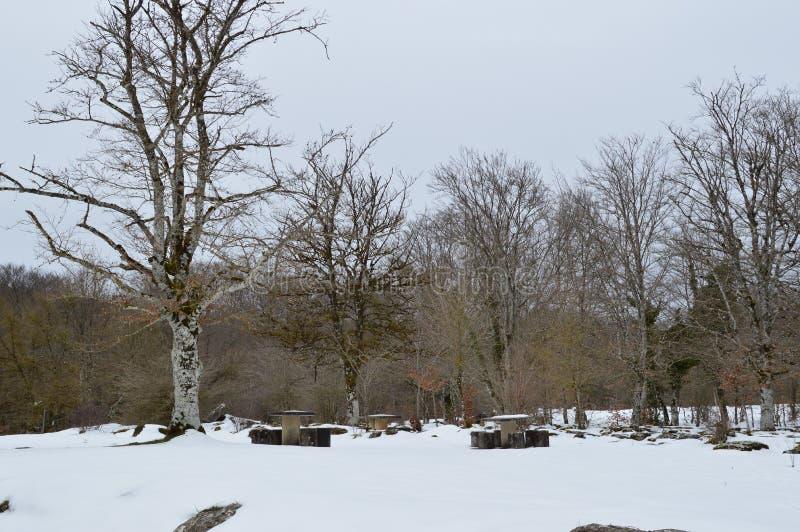 美丽的山毛榉森林在路的斯诺伊向河的跃迁完全地下了雪Nervion 自然使雪环境美化 免版税库存图片
