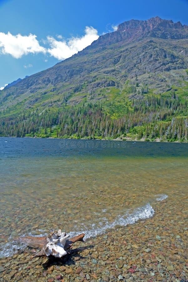 美丽的山湖垂直漂流木头和海岸线  库存照片