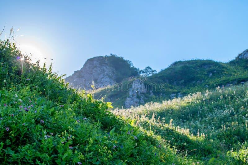 美丽的山草甸 库存照片