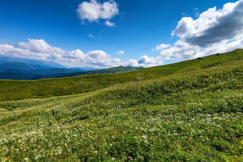 美丽的山草甸 免版税库存照片
