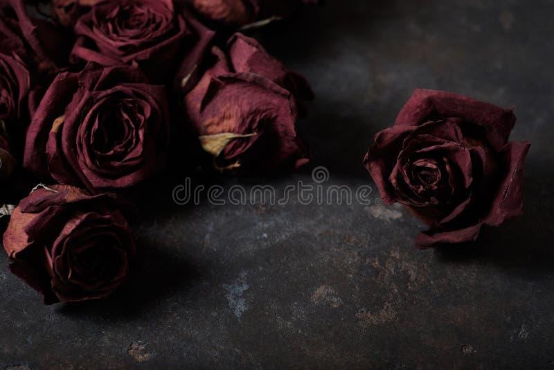 美丽的干燥玫瑰 库存照片