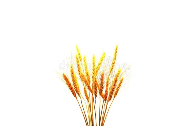 美丽的干草隔绝了白色背景 免版税库存照片