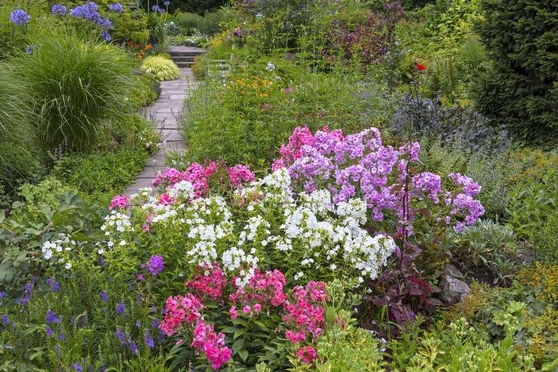 美丽的庭院在夏天,与开花的花 免版税库存照片