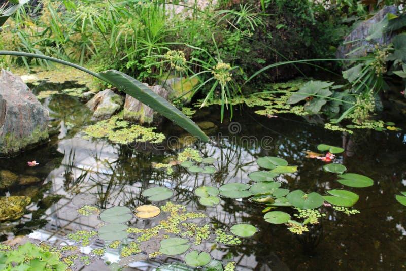 美丽的庭院湖 库存图片