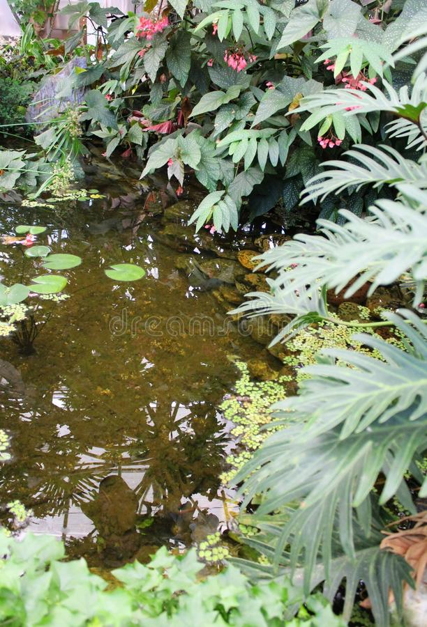 美丽的庭院湖 库存照片