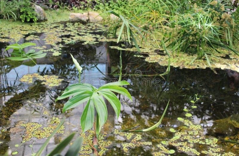 美丽的庭院湖 免版税库存照片