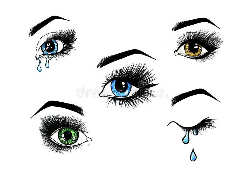 美丽的开放女性眼睛设置与长的睫毛在白色背景 构成模板例证 颜色剪影 库存例证