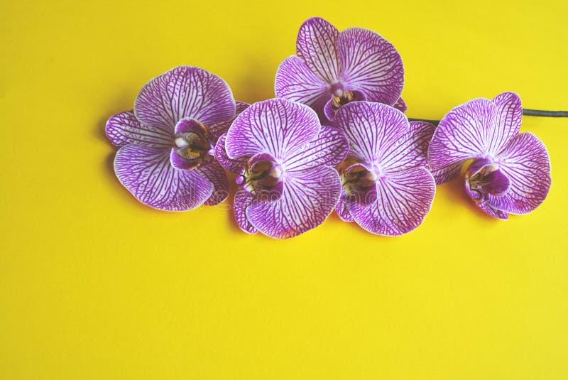 美丽的开花的兰花 免版税图库摄影