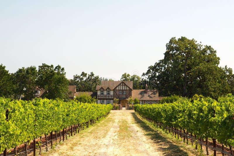 美丽的房子在葡萄园里 免版税图库摄影