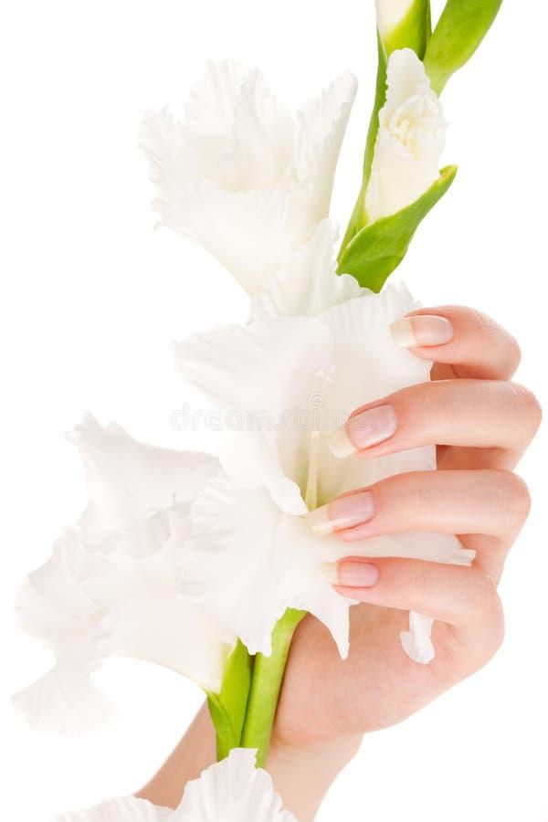 美丽的手指钉子 免版税库存图片