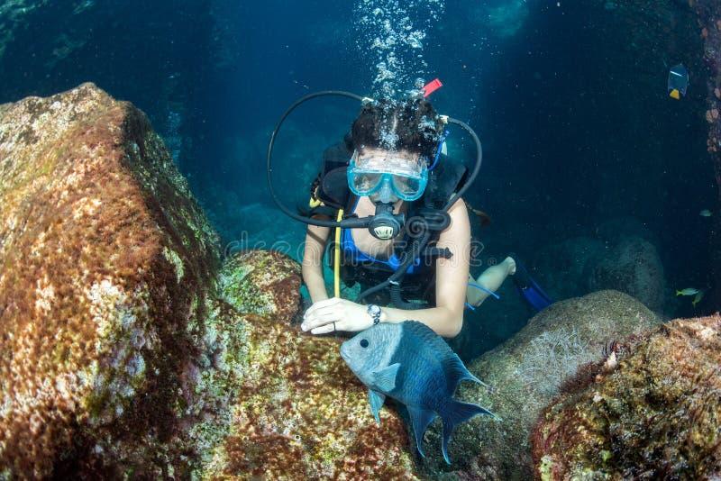 美丽的拉提纳潜水者女孩,当接触鱼时 库存照片