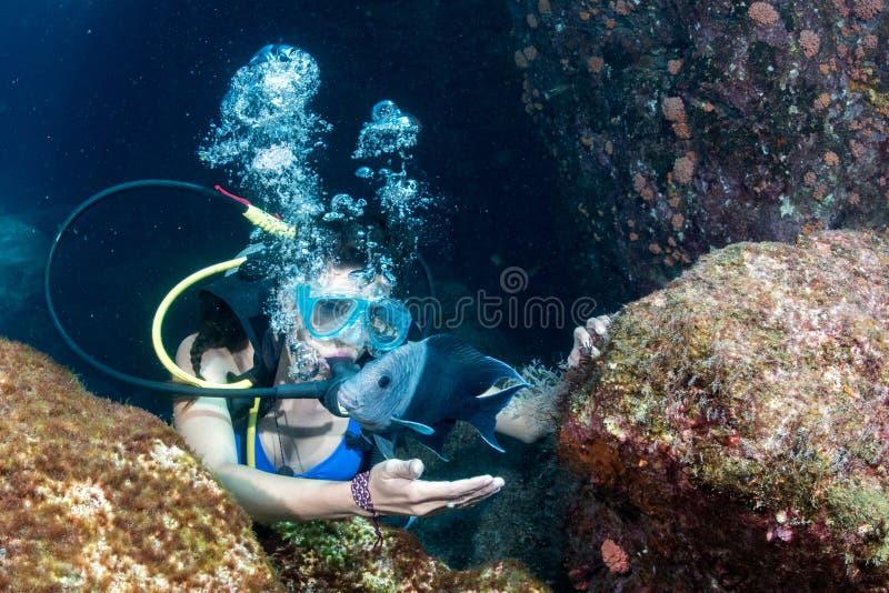 美丽的拉提纳潜水者女孩,当接触鱼时 库存图片